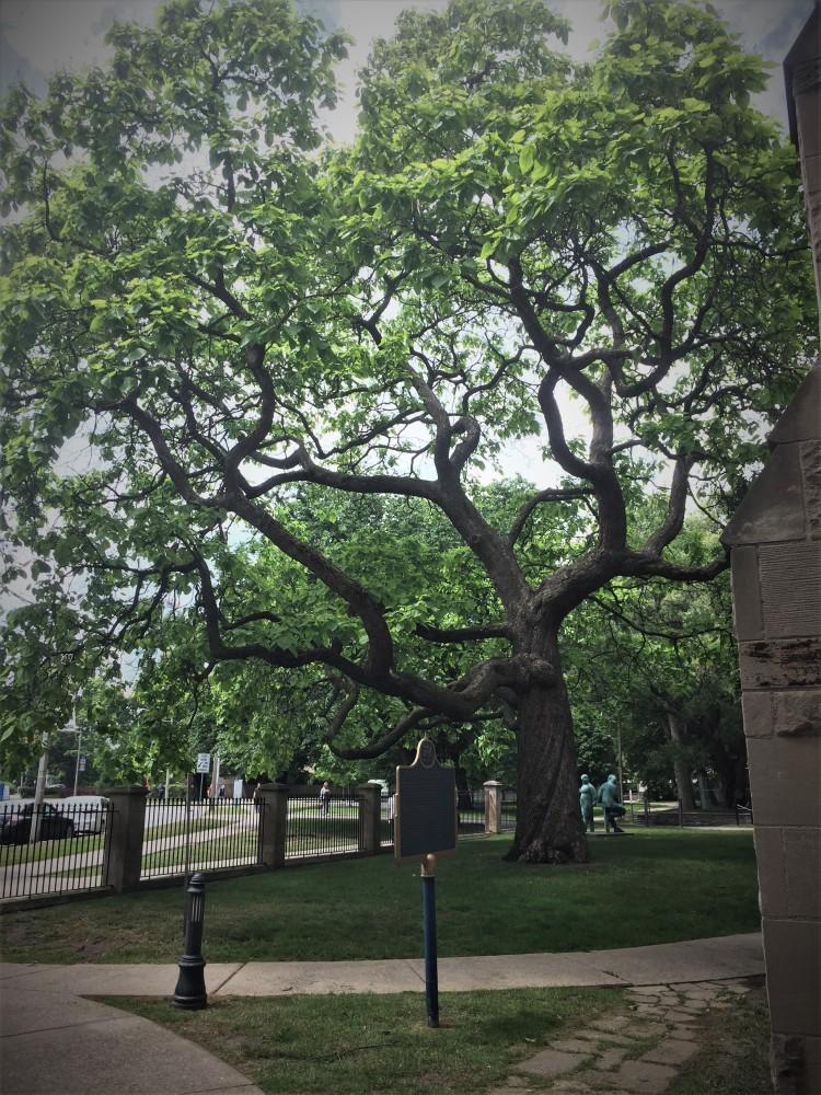 Pims tree